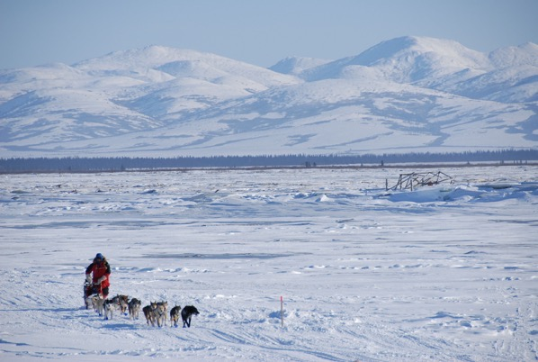 Iditarod Dog Sled Race Global Warming